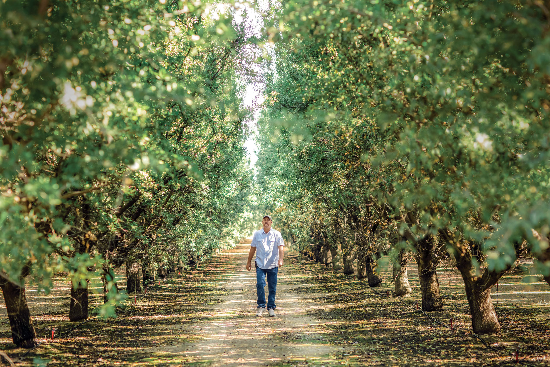 man walking through agricultural orchards